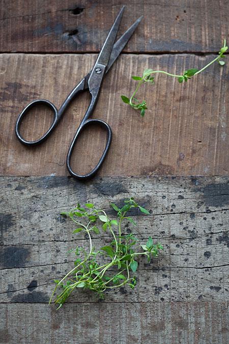 Pollo-con-tomillo-y-aceitunas-negras-(kip-met-tijm-en-zwarte-olijven)